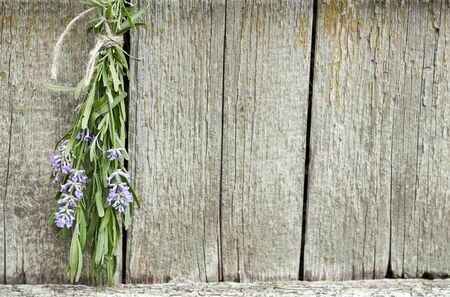 Lavender tuft hanging under the roof and drying on the background of old textured wooden wall, closeup, copy space, agriculture and aroma herbs concept