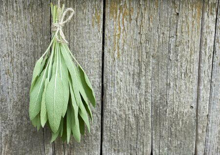 Sage tuft hanging under the roof and drying on the background of old textured wooden wall, closeup, copy space, natural medicine and aroma herbal plants concept Standard-Bild