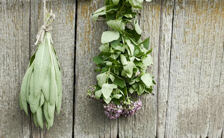 Sage and oregano tufts hanging under the roof and drying on the background of old textured wooden wall, closeup, copy space, agriculture and aroma herbs concept