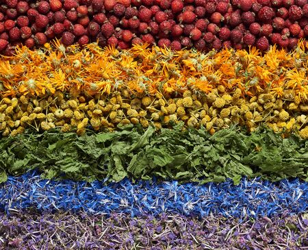Rainbow assortment of variety of hers: red dog-rose, orange calendula, yellow tansy, green nettle, blue cornflower, purple blooming sally plant, background texture, from above overhead top view