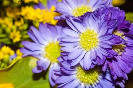 A group of purple flower with a yellow centre coming from a bouquet