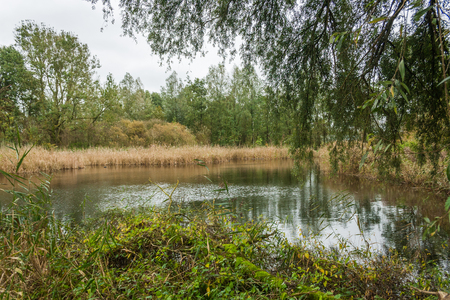 Beautifull marsh lake in the Beusebos forest next to the city of Purmerend, The Netherlands