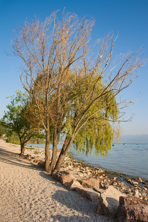 A beatifull tree on the shore of lake Garda, Italy