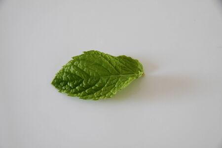 mentha: mint leaf single