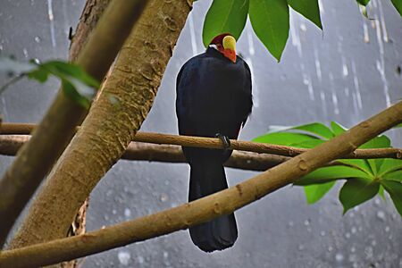 Bird of Myna on a branch ... Standard-Bild
