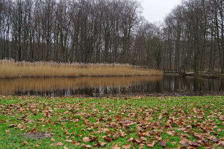 Not a big pond in the winter. Den Haag Park. Netherlands ... 写真素材 - 138838461
