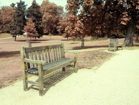Empty bench in a wooded park in the fall Stock Photo