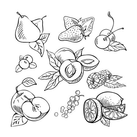 손으로 그린 과일과 열매입니다. 스케치. 흰색 배경에 손으로 그려진 된 그림