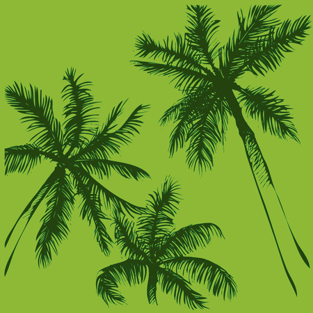 Tropical vector background. Hand painted illustration. Hand drawn palm tree silhouette.