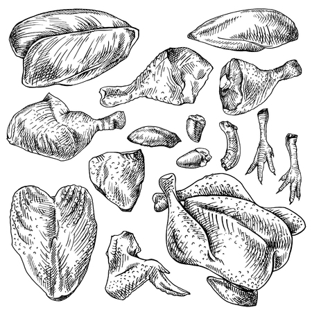 Chicken hearts internal organs of poultry vector illustration 89410148 chicken cuts hen parts domestic bird meat set engraving sketch style parts of carcass brisket wing fillet heart whole leg liver ccuart Choice Image
