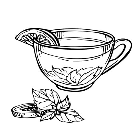 Hand drawn Sketch of Tea. Cup of tea with mint and lime, lemon isolated on white.Doodle Outline. Vintage hot drink