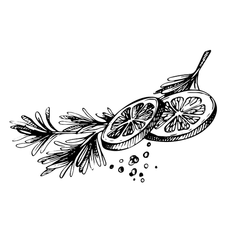 Hand drawn Sketch spice. Lemon and Herbs. lemon with rosmary and pepper isolated on white Çizim