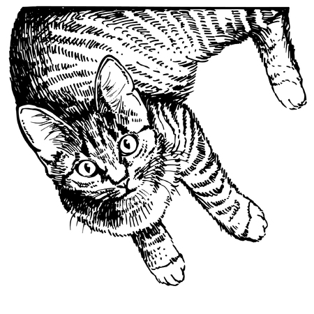 Hand drawing cat. Sketch kitten, kitty. Top view
