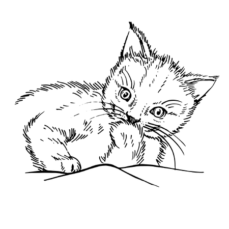 Hand drawn cat. Sketch kitten, kitty. Sketch ink illustration