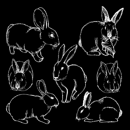 Hand drawn  Sketch Set of rabbits isolated on white. Ink illustration of rabbits sitting in various poses. Çizim