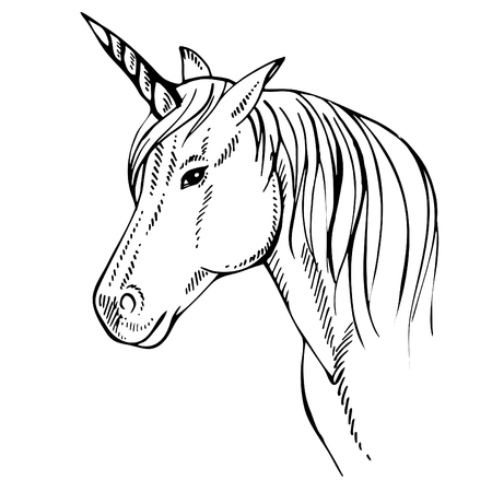 Sketch Unicorn, hand drawn ink illustration.Unicorn horse animal.White mythical horse head with long horn. Mythic symbol of fantasy horse