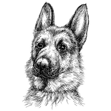 Sketch Portrait of a beautiful German Shepherd. German sheepdog head freehand drawing Vectores