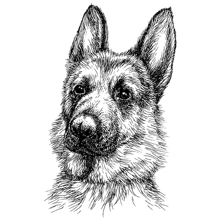 Sketch Portrait of a beautiful German Shepherd. German sheepdog head freehand drawing Çizim