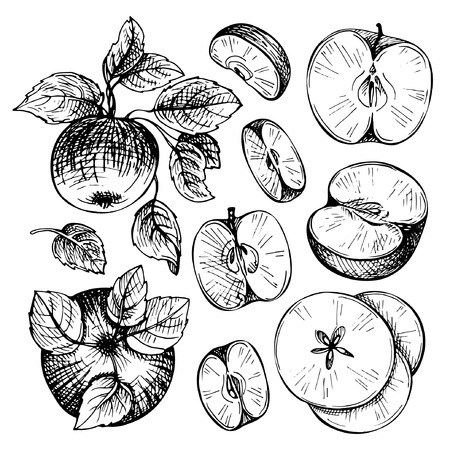 Sketches and engravings apples, branch and leaves. Apple fruit. Set of hand drawn apple. Vintage sketch style illustration. Çizim