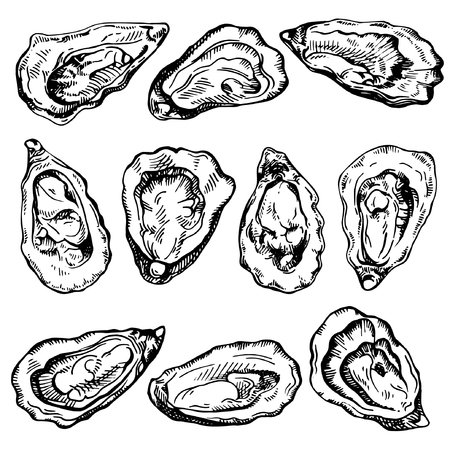 Hand drawn sketch oyster set. Sketch illustration of fresh seafood. Isolated on white background. Çizim