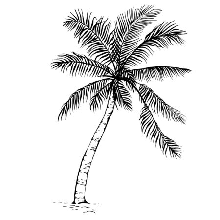 Hand drawn sketch Palm tree silhouette