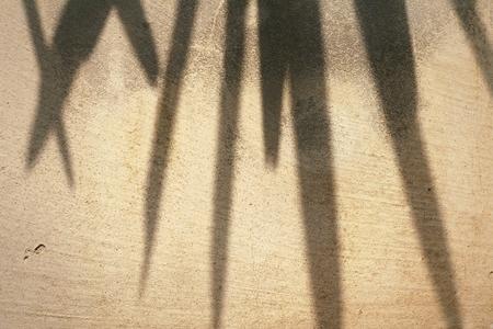 shadow: shadow of leaves