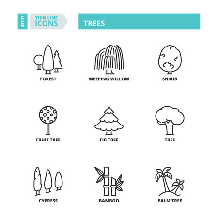 weeping willow tree: Flat symbols about trees. Thin line icons set. Illustration