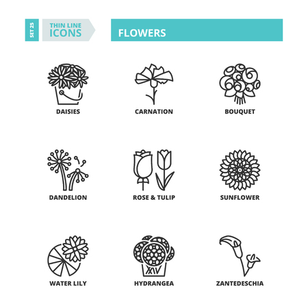 roses garden: Flat symbols about flowers. Thin line icons set.