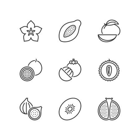 exotic fruit: Thin line icons set about exotic fruit. Flat symbols