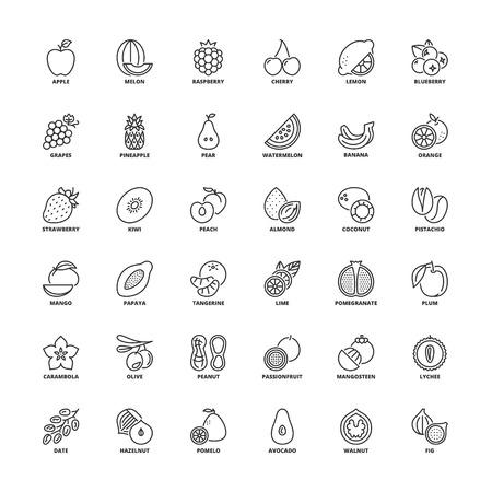 pistachio: Outline icons set. Flat symbols about fruit Illustration