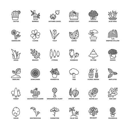 weeping willow tree: Outline icons set. Flat symbols about flowers, plants and trees.