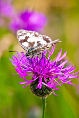 butterfly on the meadow flower photo