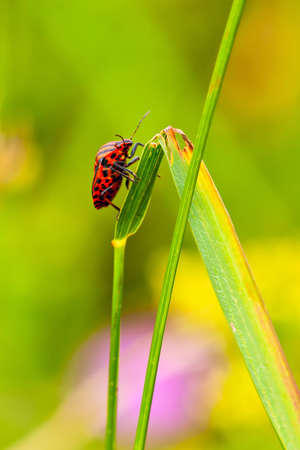 beetle on the edge of grass photo
