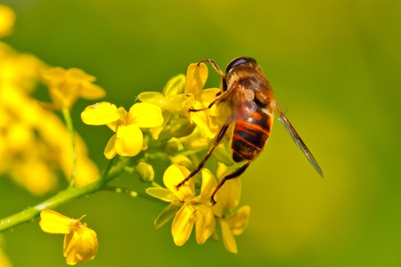Fly on a yellow flower photo