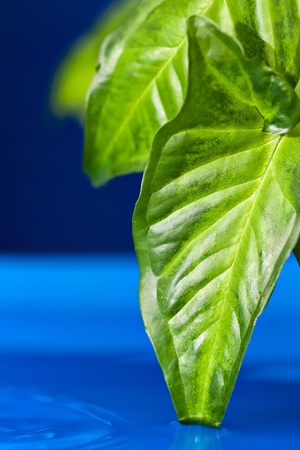 green leaves on a blue background photo