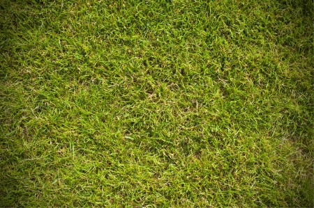 Top view of clean green grass background photo