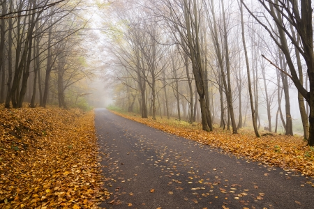 hazy asphalt forest road in the autumn