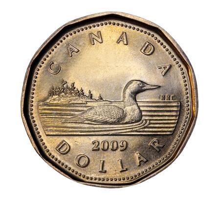 Ottawa, Canada, September 2010 - Canadian one dollar coin