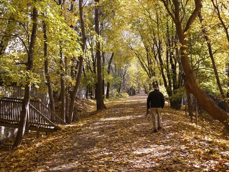Chicago, USA, November 2011 -  an elderly man enjoys exercise by walking his dog on a tree lined path