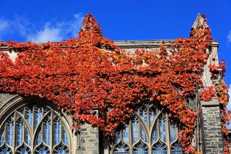 ivy league: Toronto, Canada, November 2009, University of Toronto - fall scenes with ivy covered building Editorial