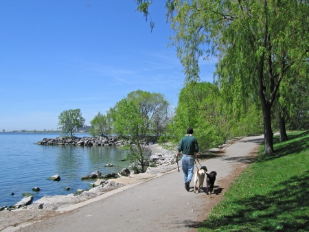 Gehen Hunde in einem Park am See, Toronto 2010 Standard-Bild - 20426594