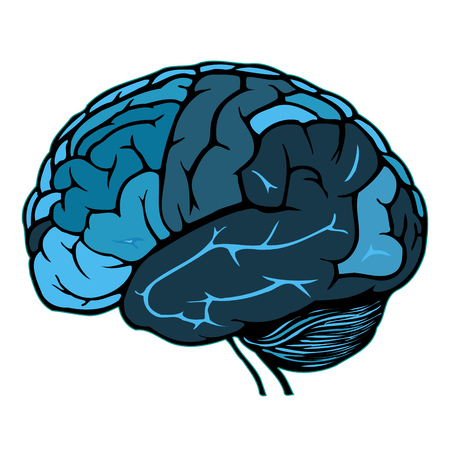 human brain Stock Vector - 8557339