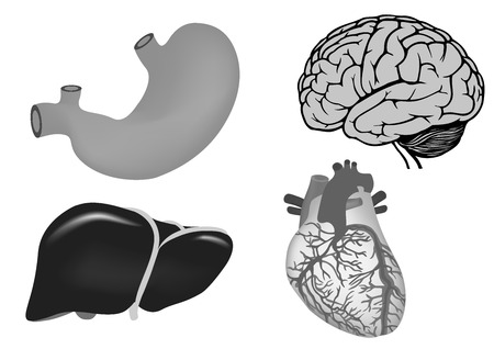 vector illustration of human heart, stomach, liver, brain