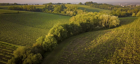 Bordeaux vineyards, Entre Deux Mers, Aquitaine area of the Gironde department Aerial View, France 写真素材