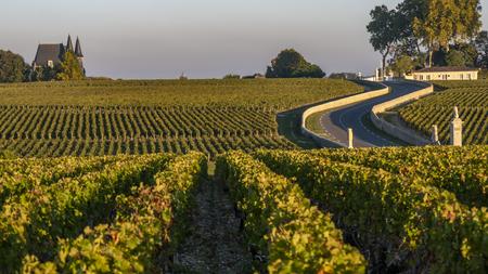 Route des Chateaux, Vineyard in Medoc, amous wine estate of Bordeaux wine, France 版權商用圖片
