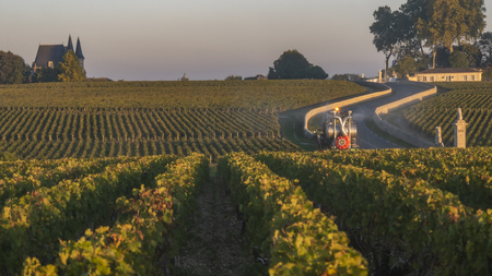 Route des Chateaux, Vineyard in Medoc, amous wine estate of Bordeaux wine, France Stok Fotoğraf