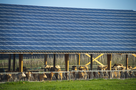 Solar panels on a cowshed