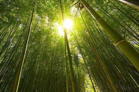 Plantacja bambusa, zielony bambusowy płot tekstura tło, bambusowa tekstura Zdjęcie Seryjne