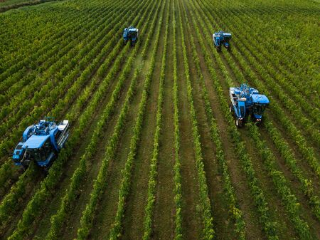 France, Gironde, September, 26-2019, Mechanical Harvesting With Four Machines For Selling, Aoc Bordeaux, Vineyard Bordelais, Gironde, Aquitaine
