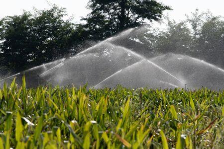 Sistema de riego regar el campo de maíz verde joven en el jardín agrícola por agua springer